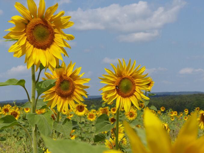 Blumen pflücken für letzte Wünsche thumbnail